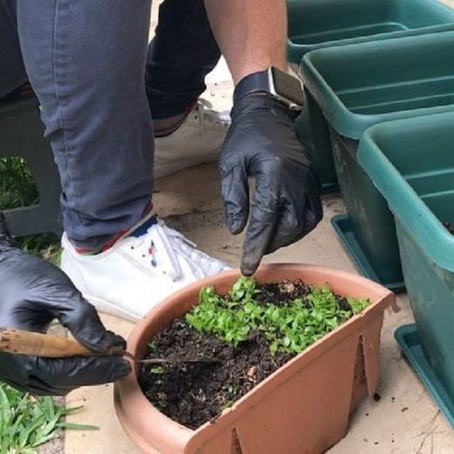 consejos para horticultura