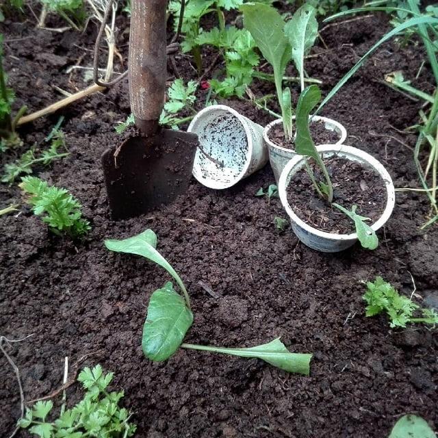 trucos para plantar en invierno
